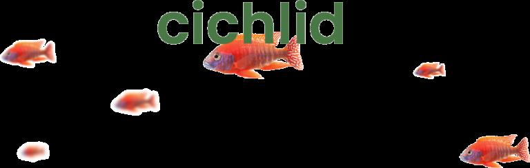 Cichlid at VGP Marine Kingdom